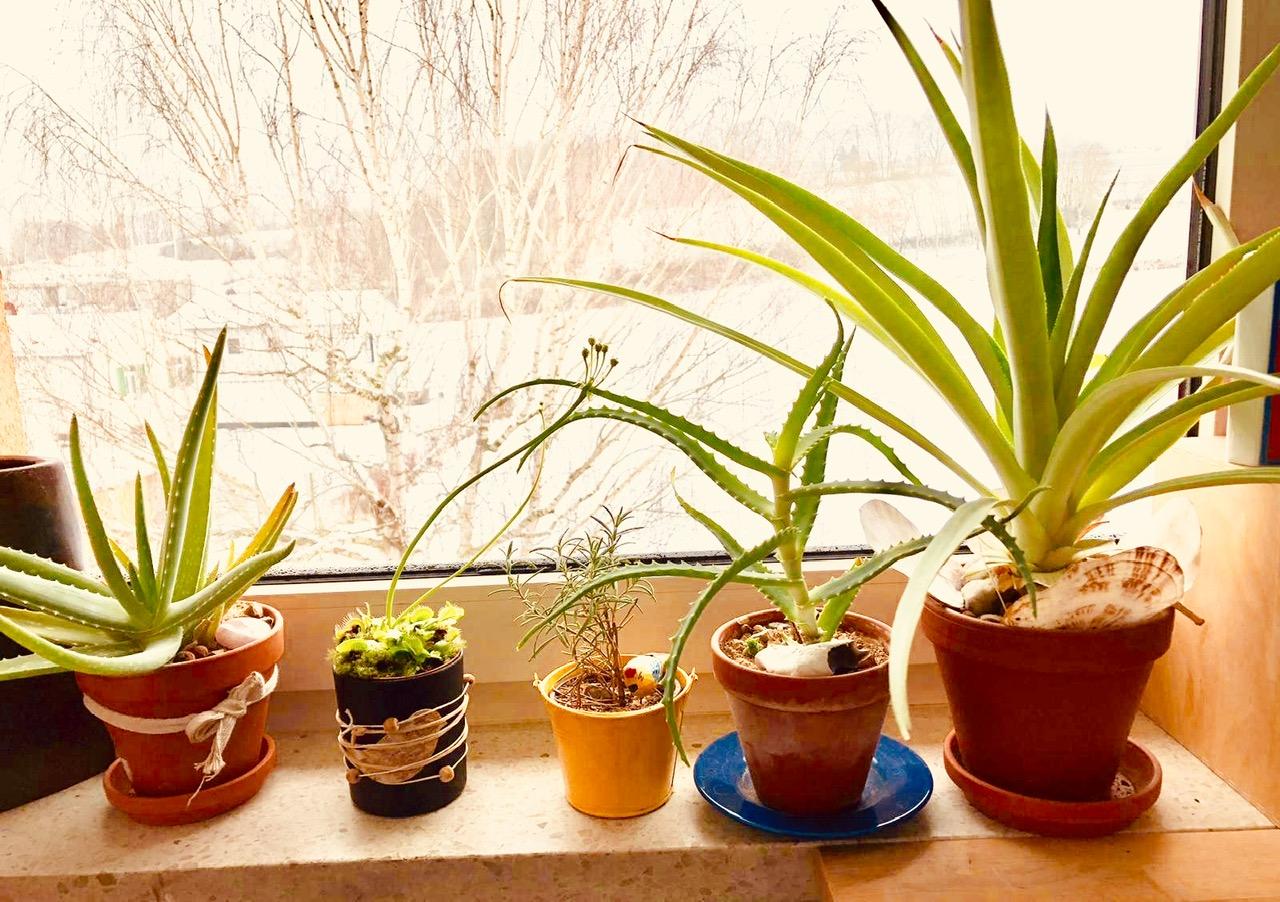 Für immer in der Pflanzenhölle