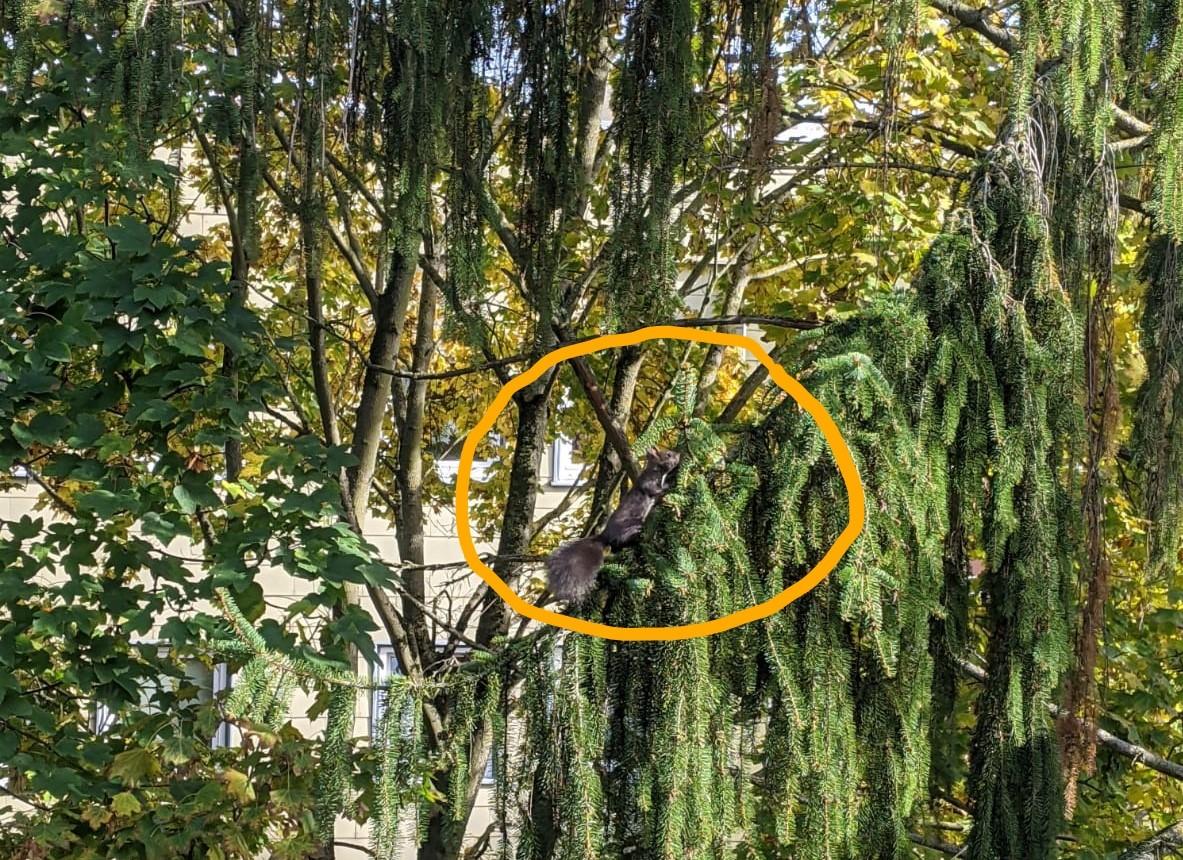 Wohnsinn-Kolumne: Von Baumkronen-Kletterern und Eichhörnchen-Vorspiel