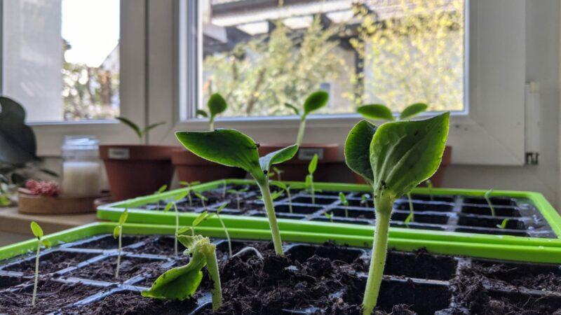 Wohnsinn-Kolumne: Der stolze Pflanzen-Papa