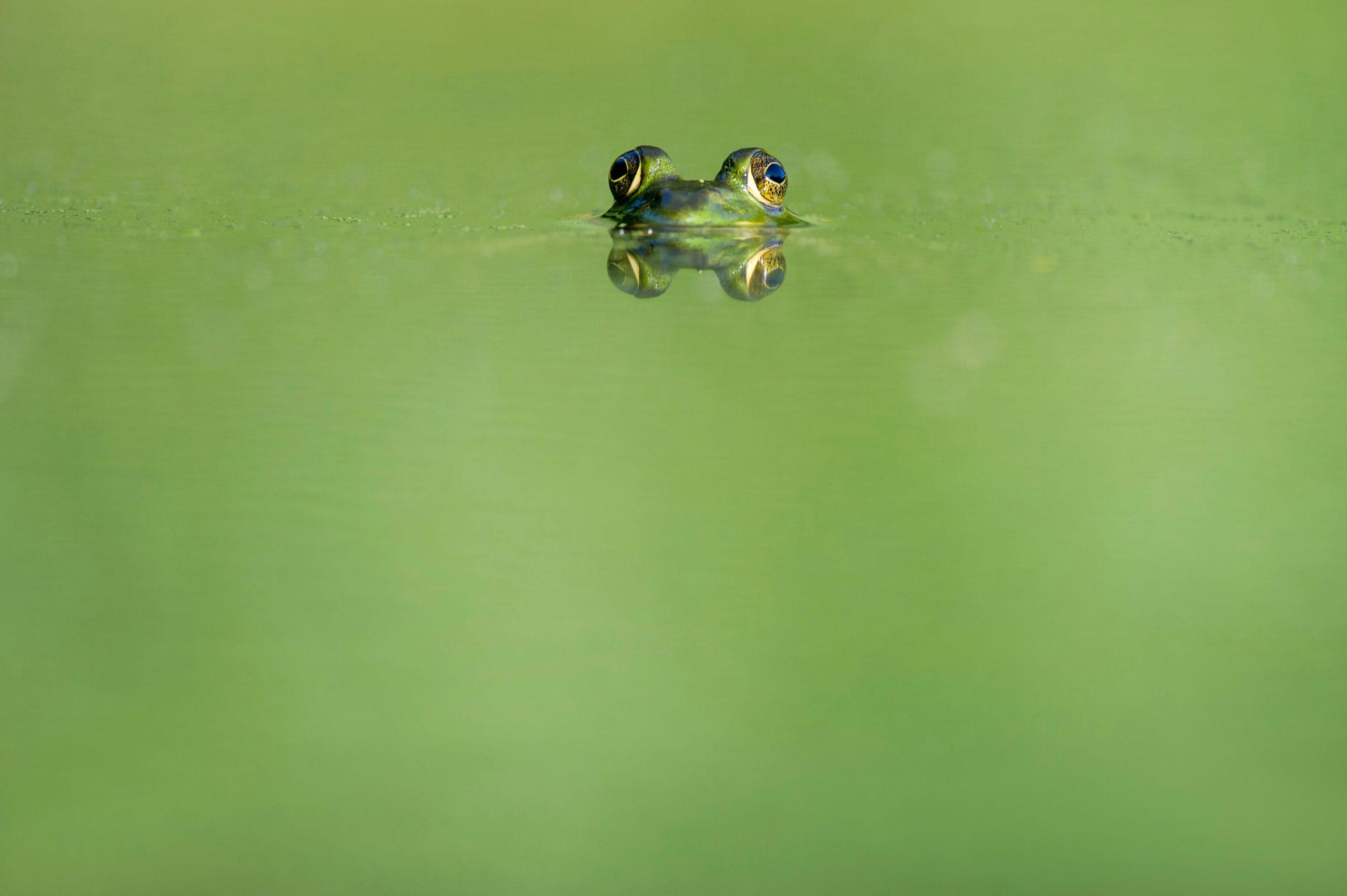 Feminis:muss: Der Frosch und ich